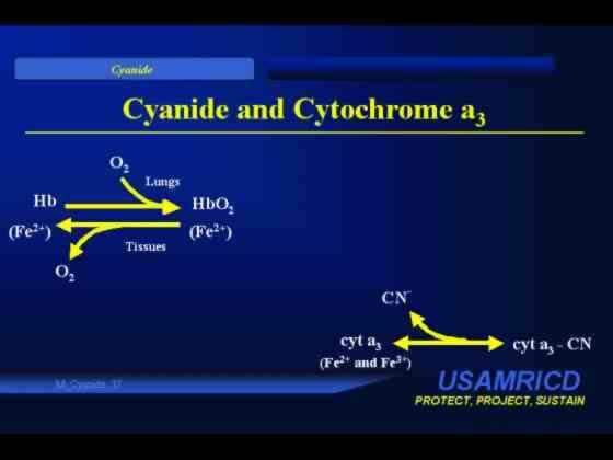005 Cyanide